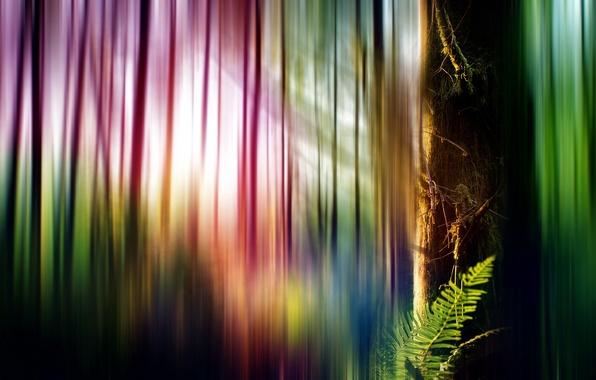 Picture style, background, tree, color, form