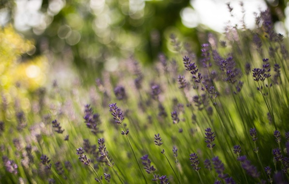 Picture forest, stems, bokeh, lavender
