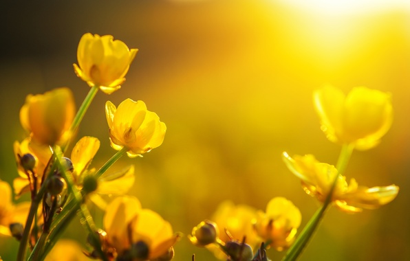 Picture the sun, flowers, spring, tulips, bokeh