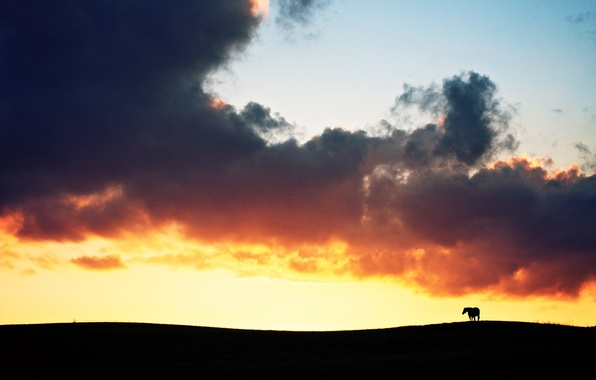 Picture field, clouds, sunset, fire, horse, silhouette