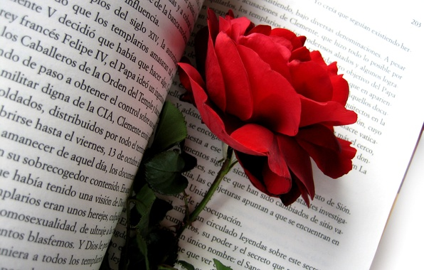 Picture flower, flowers, nature, text, rose, petals, Bud, briar, book, red rose, red
