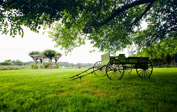 Picture greens, field, grass, trees, landscape, nature, tree, cart