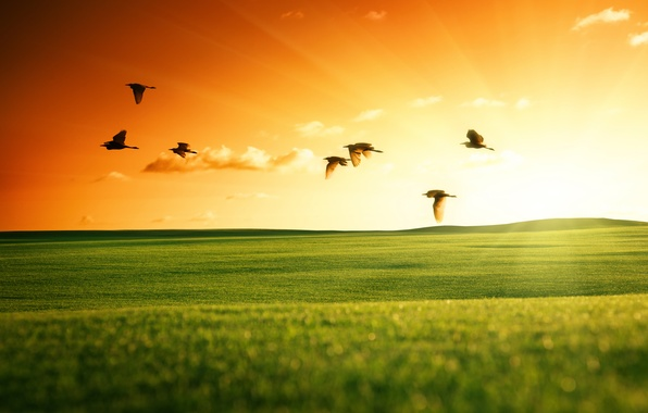 Picture field, the sky, the sun, landscape, sunset, birds, nature, green, swans, fly, Wallpaper from lolita777