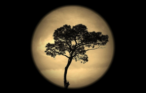Picture the sky, night, tree, the moon, silhouette