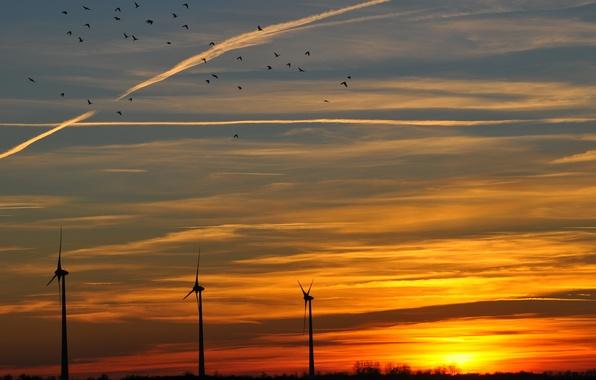 Picture the sky, the sun, clouds, sunset, birds, orange, The evening, windmills
