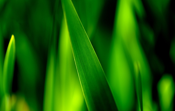 Picture greens, grass, macro, sheet