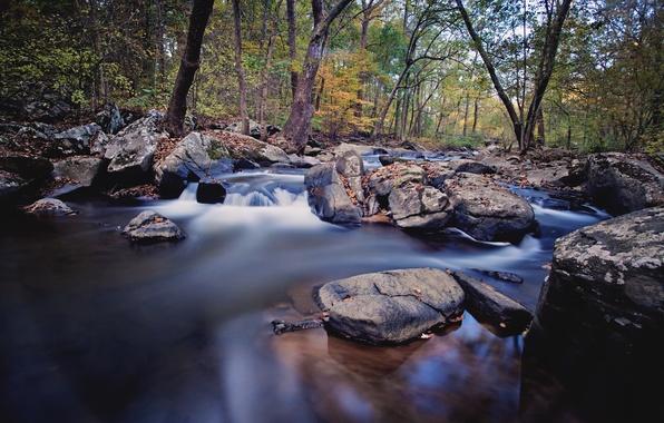 Picture autumn, forest, river, stream, stones