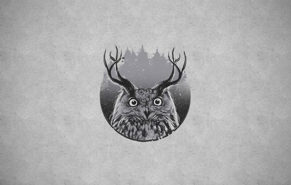 Picture owl, horns, owl+horn