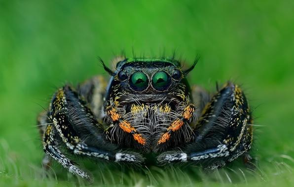 Picture macro, nature, spider