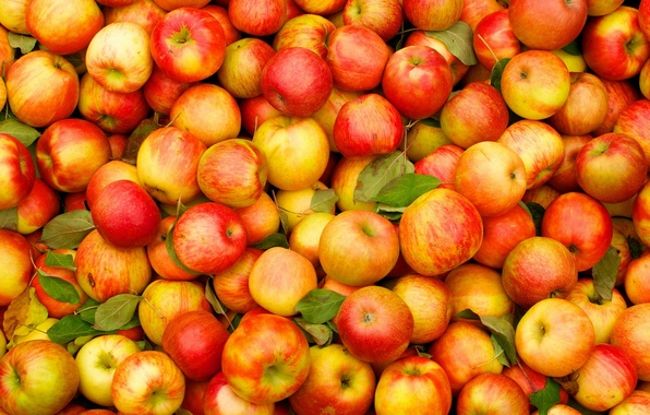 Picture fruit, apples, standard