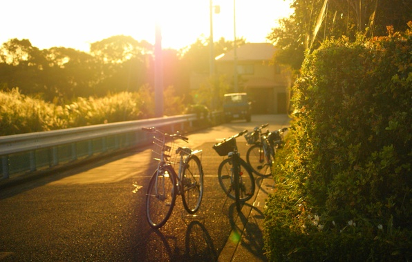 Picture road, machine, leaves, the sun, trees, bike, the city, background, tree, widescreen, Wallpaper, street, mood, …