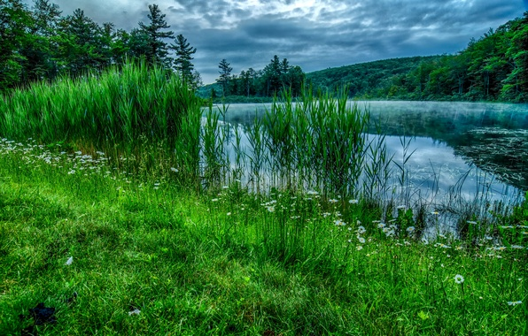 Picture forest, summer, grass, trees, river, the reeds, shore, chamomile