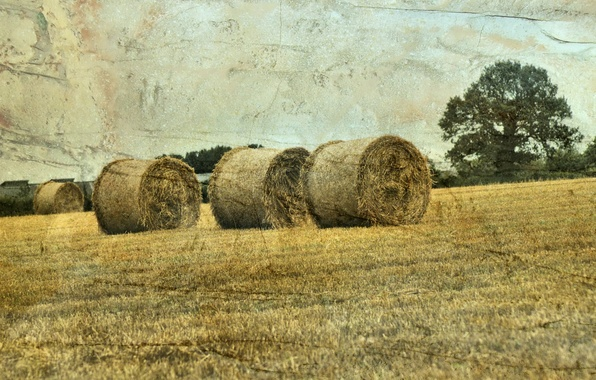 Picture field, landscape, style, hay