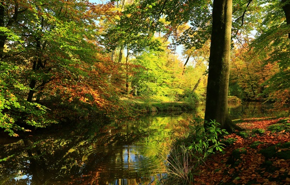 Picture greens, autumn, forest, leaves, water, trees, reflection, river