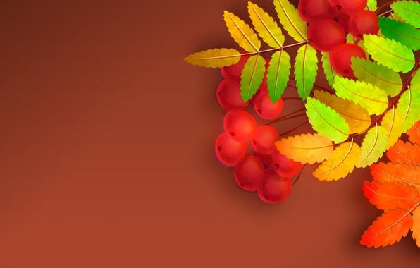 Picture autumn, leaves, Rowan