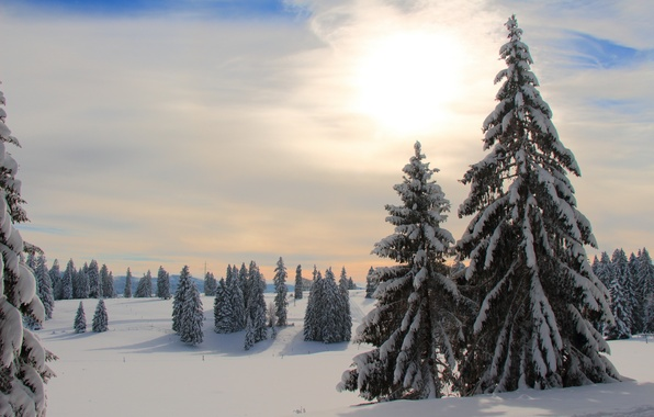 Picture winter, forest, morning