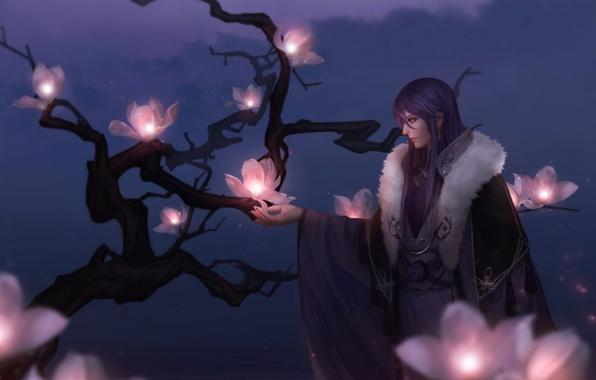 Picture flowers, night, tree, branch, anime, art, guy, vocaloid, kamui gakupo, auau