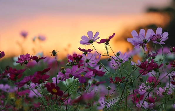 Picture sunset, flowers, nature, background, widescreen, Wallpaper, beauty, wallpaper, nature, sunset, widescreen, flowers, background, beauty, full …