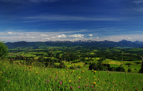 Picture field, the sky, grass, clouds, trees, flowers, mountains, valley, horizon, meadow