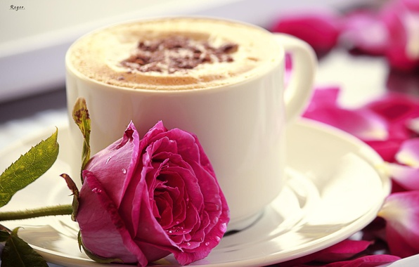 Picture flower, pink, rose, mug, Cup, cappuccino