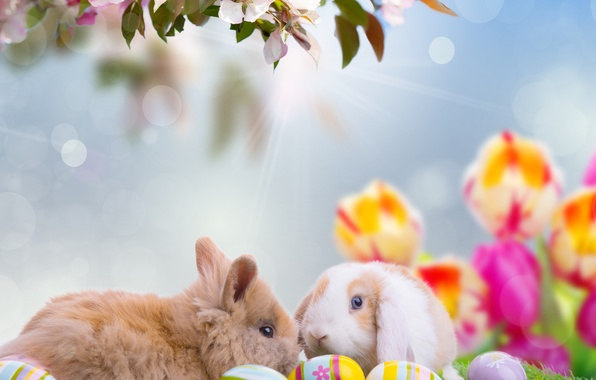 Picture animals, the sky, rays, flowers, nature, holiday, eggs, branch, spring, Easter, rabbits, tulips, bokeh, Easter