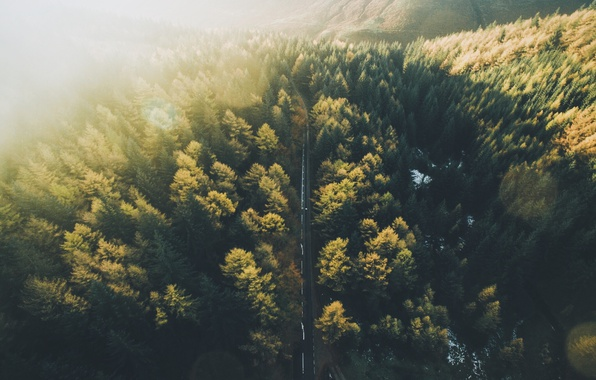 Picture road, forest, the sky, light, tree, the view from the top