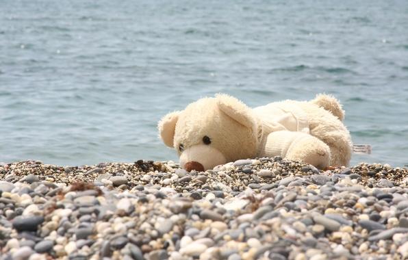 Picture sea, joy, pebbles, mood, animal, shore, bear