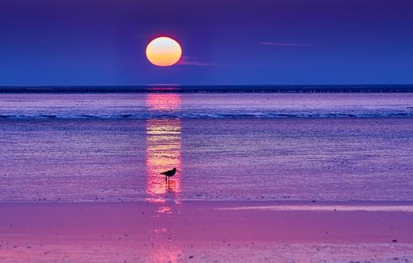 Picture sea, the sky, the sun, sunrise, dawn, bird, Morning, horizon, silhouette, blue