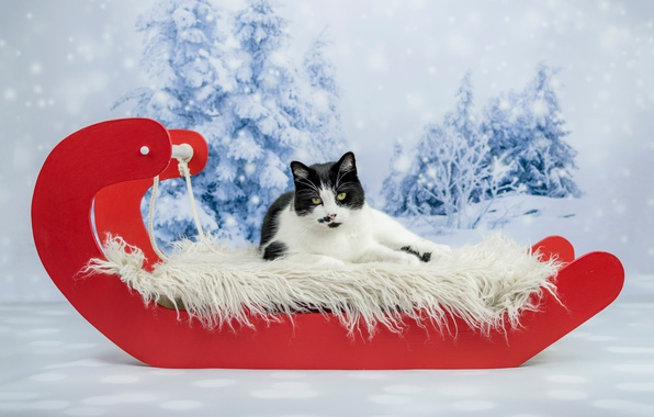 Picture winter, cat, cat, look, snow, red, background, holiday, black and white, new year, Christmas, ate, …