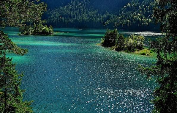 Picture forest, summer, trees, landscape, nature, Lake