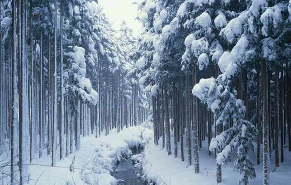 Picture winter, forest, snow, stream, Nature