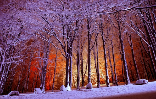 Picture winter, forest, light, snow, trees, Park
