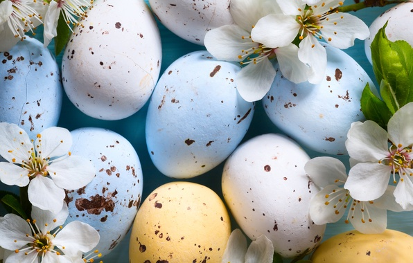 Picture flowers, branches, cherry, holiday, eggs, Easter, Easter, eggs