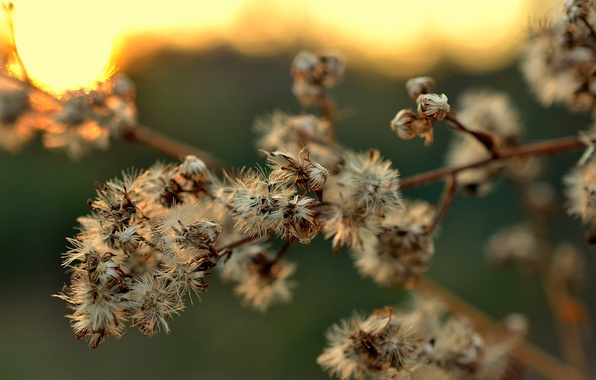 Picture branches, dry, inflorescence, bokeh
