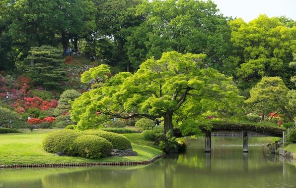 Picture trees, Japan, Tokyo, Tokyo, Japan, the bridge, pond, Japanese garden, Rikugien Garden, Garden Rikugien