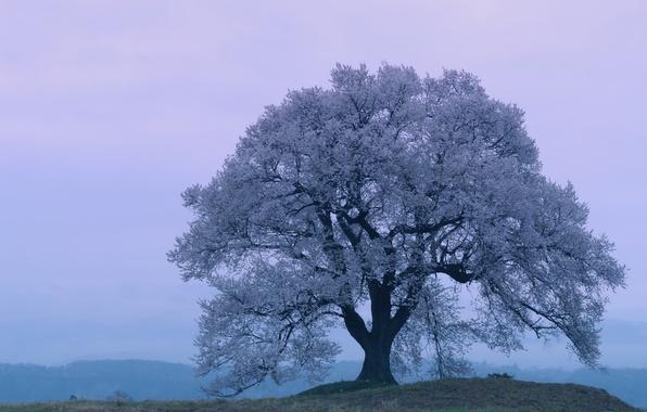 Picture spring, the evening, Japan, Sakura, Japan, Cherry Blossoms, sakura, spring, cherry blossoms, Evening