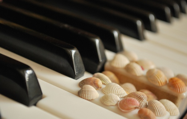 Picture keys, shell, white, piano, black