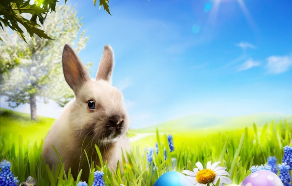 Picture grass, flowers, chamomile, eggs, spring, rabbit, meadow, Easter, grass, sunshine, rabbit, flowers, spring, Easter, eggs, …