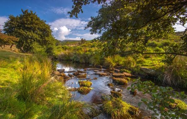 Picture trees, river, England, river, England, Peak District National Park, Derbyshire, Derbyshire, river Berbagi Brooke, Longshaw …