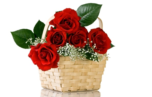 Picture flower, flowers, nature, basket, roses, bouquet, red, basket