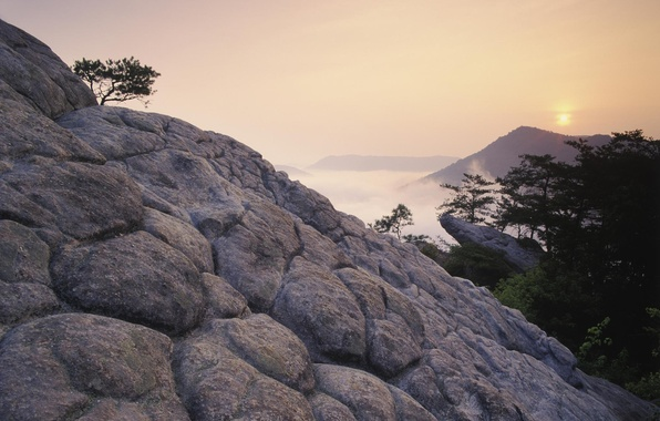 Picture trees, sunset, mountains, fog, rocks, height