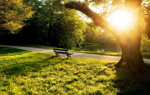 Picture summer, grass, the sun, trees, bench, pond, tree, the evening, shop, shop, bench