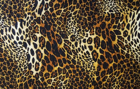 Picture wool, leopard, skin, fur, texture