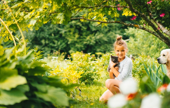Picture nature, mood, dog, girl, kitty, friends
