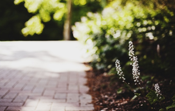 Picture leaves, macro, flowers, green, background, widescreen, Wallpaper, blur, wallpaper, flowers, flower, widescreen, flowers, background, macro, …