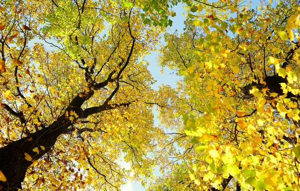 Picture autumn, the sky, leaves, trees, branches, trunk, crown