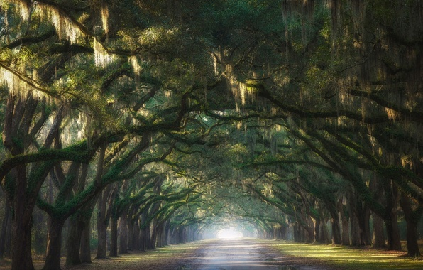 Picture road, light, trees, nature, the way, branch, arch, alley, arch