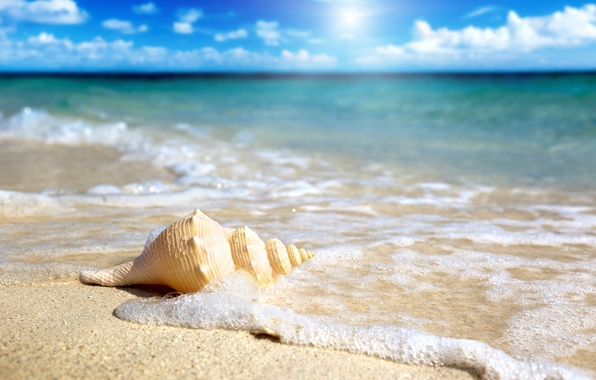 Picture sand, sea, the sky, the sun, shell, surf