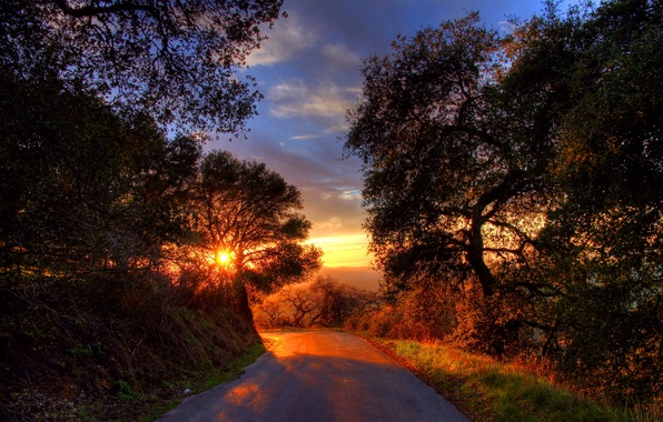 Picture road, trees, landscape, sunset
