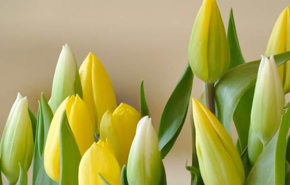 Picture leaves, bouquet, petals, Bud, tulips